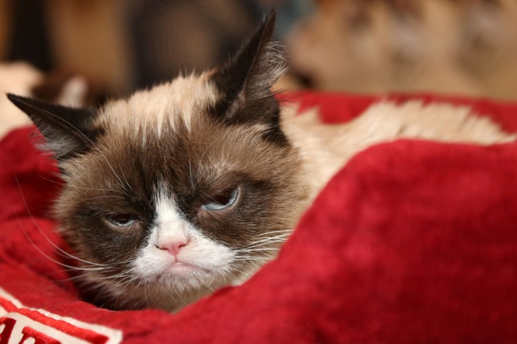 Cat Content: So krallen sich Katzen das Internet